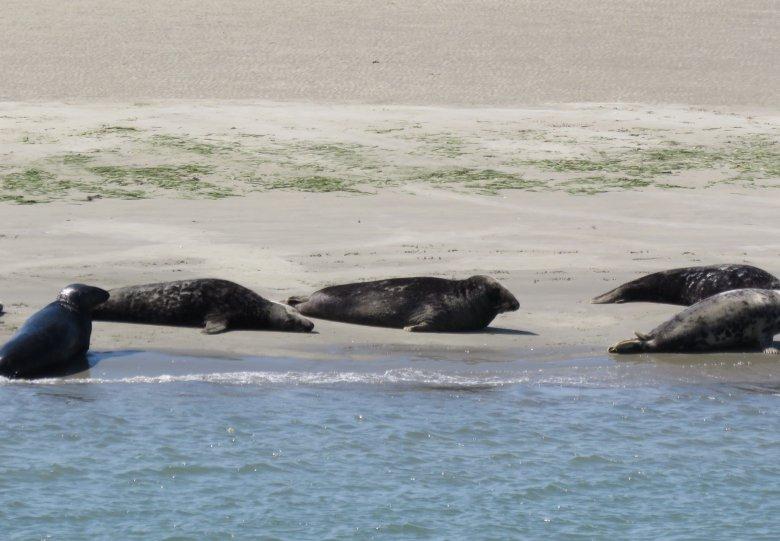 Zeehonden Safari vanuit Zierikzee