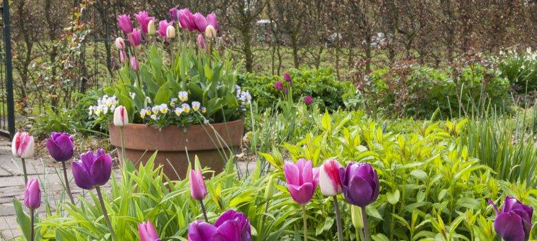 Open voorjaarsweekenden bij de Boschhoeve