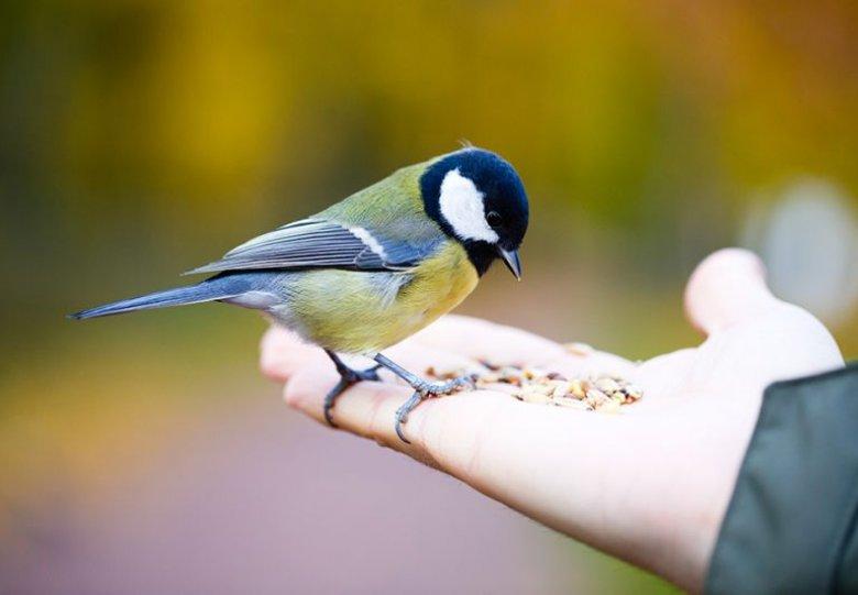 Gratis online vogelcursussen