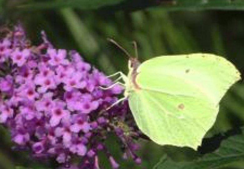 Zomerdag: Bijen en Vlinders