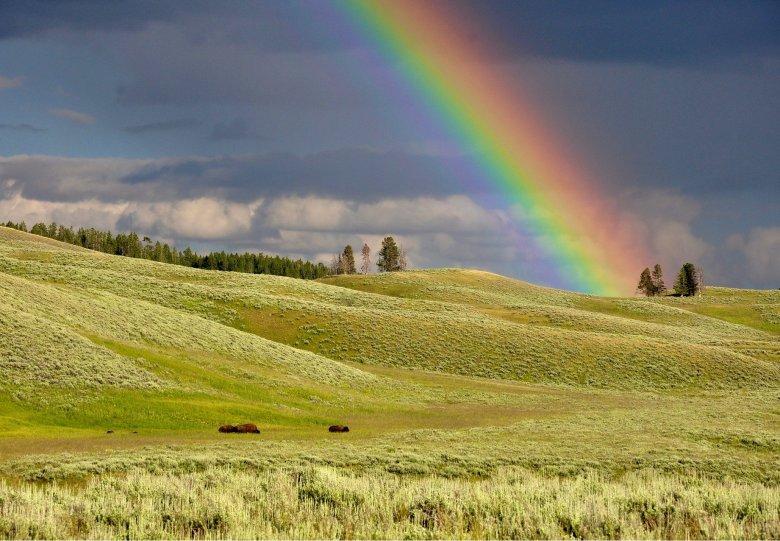 Themarondleiding Regenboogbuurt