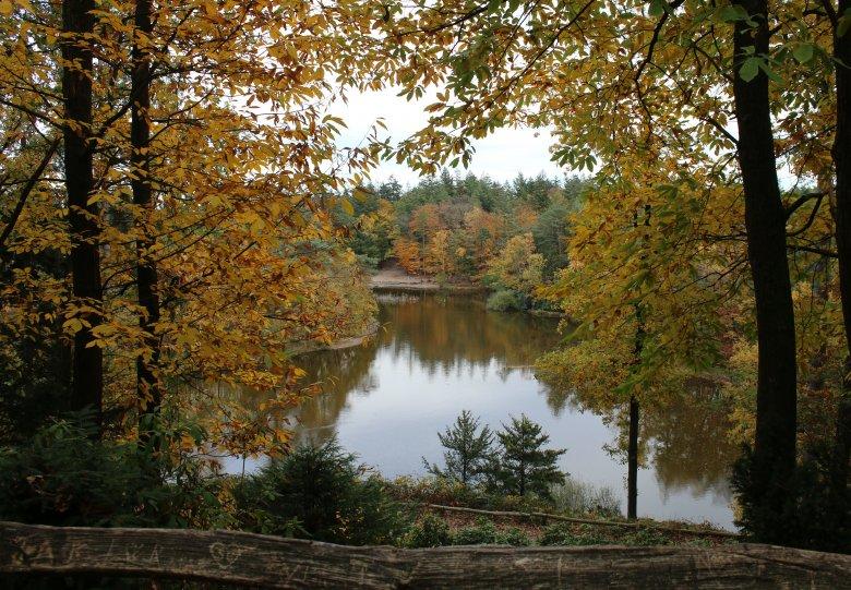Natuurwandeling 'Herfst in bos  Birkhoven'