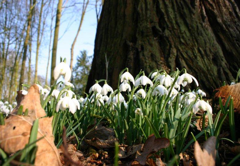 Winter wonderland of voorjaar op Hoekelum