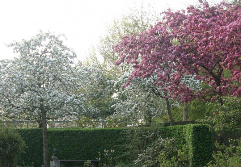 'Beautiful colours of Spring' bij Kijktuinen Nunspeet