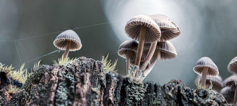 Herfst! Op zoek naar de mooiste paddenstoelen