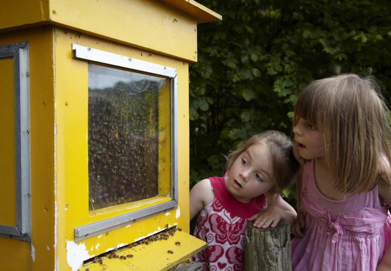 Kom naar de bijenstal op De Sprengenberg