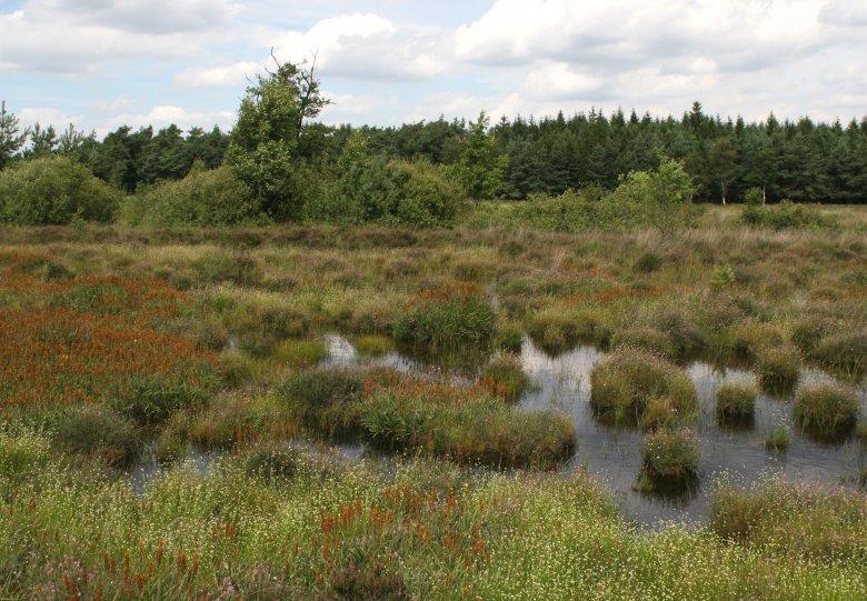Bos- en heidewandeling op landgoed Staverden