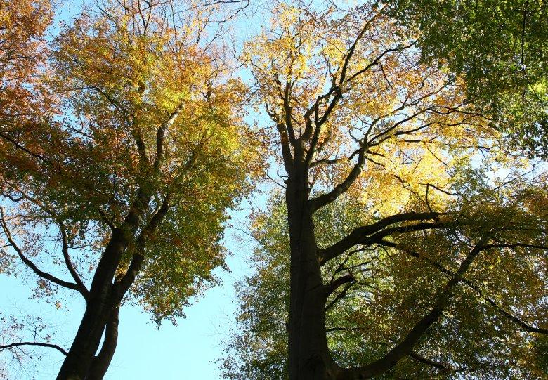 Bomenwandeling op de Driemark