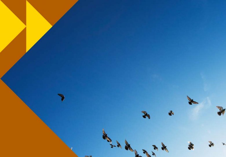 SGUU lezing: De trekvogel als vliegende spion