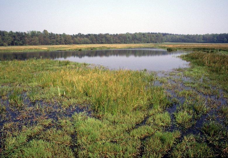 Lange dagwandeling Wisselse Veen & Tongerense Heide