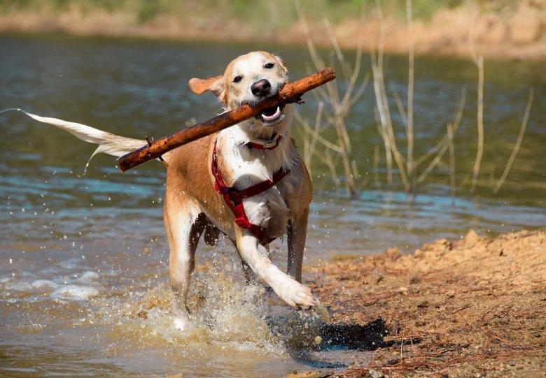 Hondenlosloopgebieden Veluwe in trek