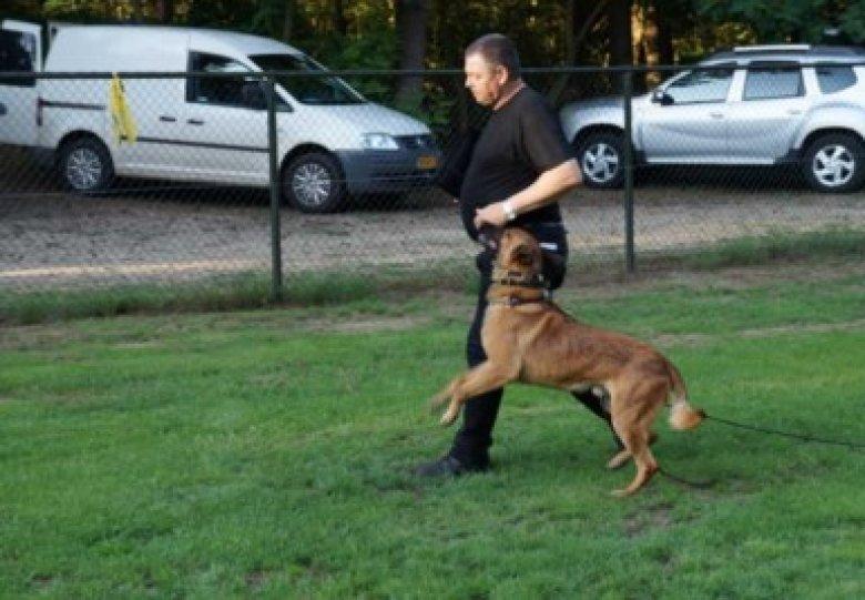 Bijwonen van een politie hondentraining