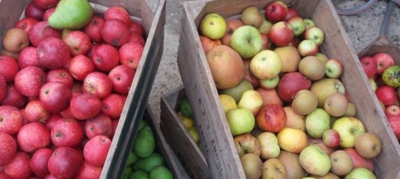 Fruitpersdag Terneuzen 2021