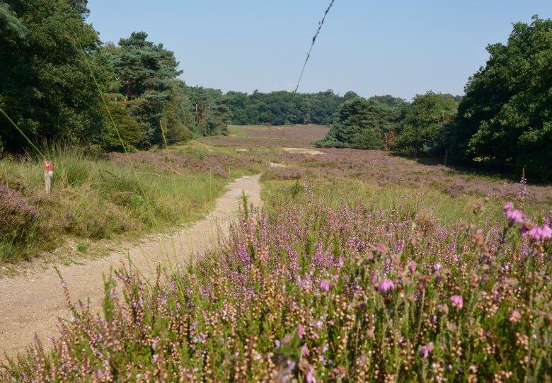 Heidewandeling op landgoed Warnsborn