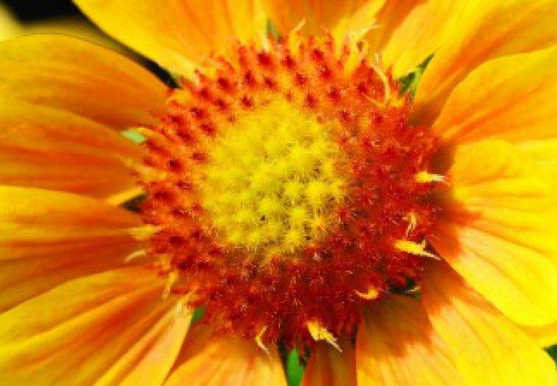 Tuinstartersdagen in september!