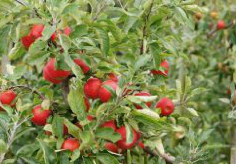 Nationale Fruitplukdag