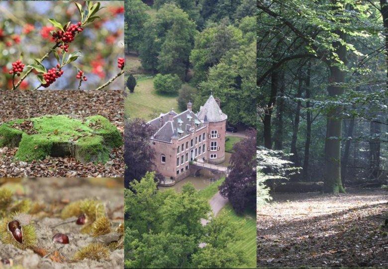 Beleef de herfstsfeer bij kasteel Maarsbergen