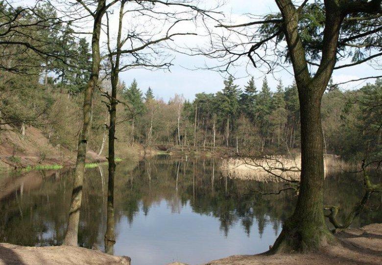 Winterwandeling in bos Birkhoven