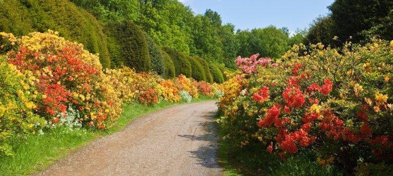 Kleuren -en geurenspektakel op landgoed Duno