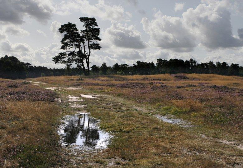Landgoed Heidestein