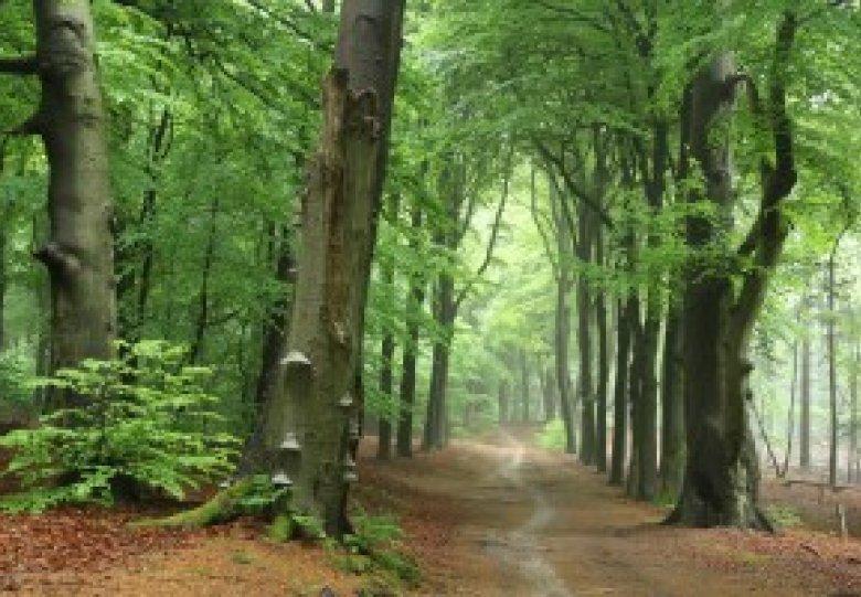 Ontdekkingstocht Amerongse en Zuilensteinse Bos