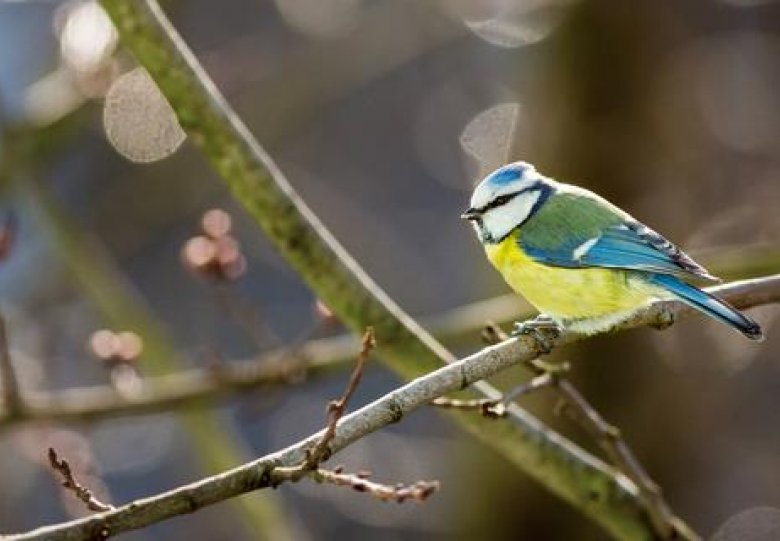Mijn tuin, mijn Vogelparadijs