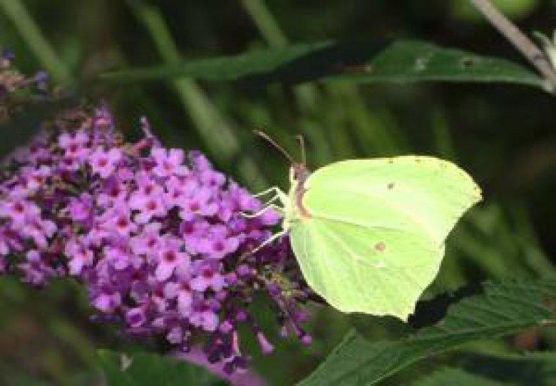 Zomerdag: leer alles over vlinders en bijen