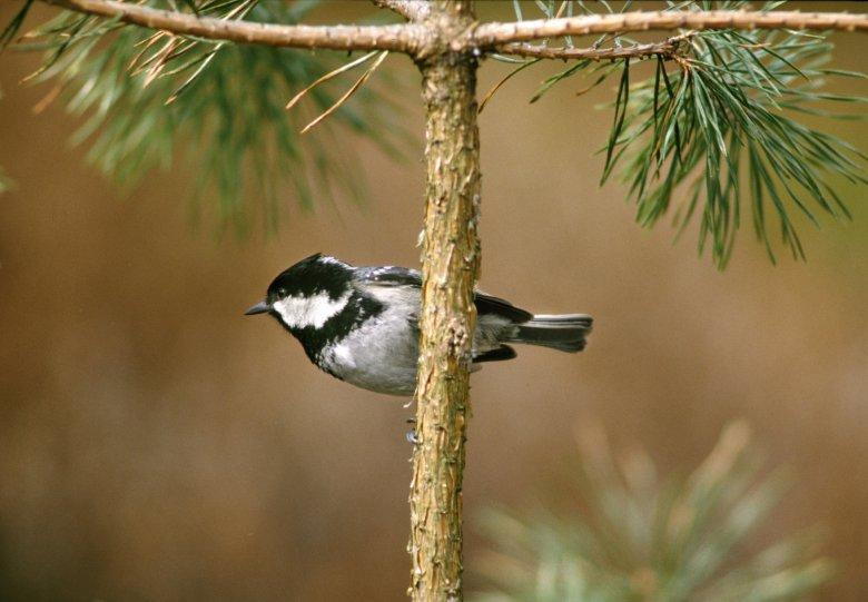 Vogelzangwandeling op landgoed Klein Noordijk