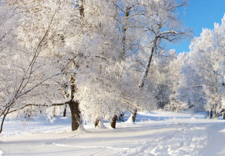 """Themawandeling """"bomen in de winter"""" bij Beerschoten"""