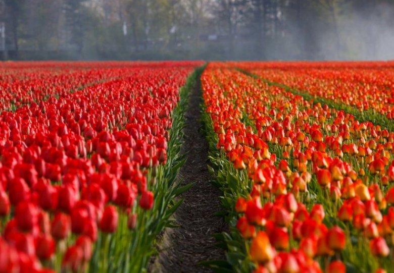 Tulpenfestival 2021