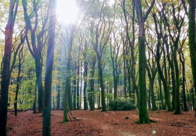 Lange wandeling naar de dansende bomen van Drie
